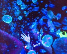 Tekno Bubbles